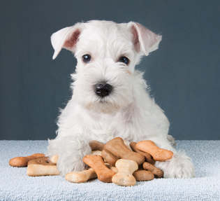 Factors to consider when choosing a doog food